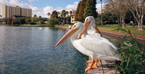 Preferred Coral Springs Florida Hotels