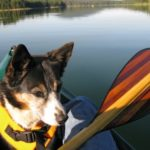 Dog wearing a life jacket in a canoe out on the lake