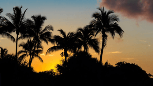 Things to Do in the City of Sanibel, Florida