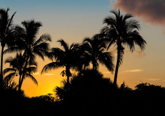 Exciting Things to Do in Sanibel, Florida
