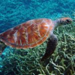 It's Sea Turtle Nesting Season: How to Get Involved