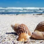 How to Celebrate National Seashell Day on Sanibel Island, Florida