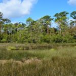 Discover Pumpkin Hill Creek in Jacksonville